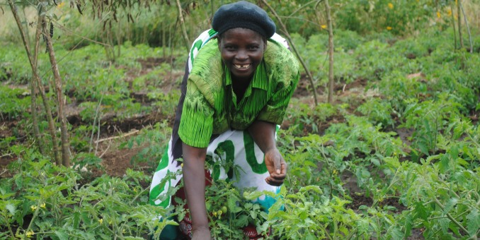 Mary Zumbuza tending her irrigation plot in the Nsembe irrigation scheme, Malawi. Photo: Irish Aid