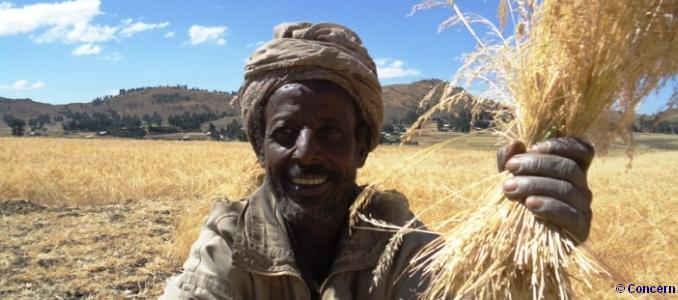 Ahmed Yimer, Ethiopia, harvesting his improved Tef, grown from seeds provided by Concern Worldwide, with the support of Irish Aid. Photo: Concern