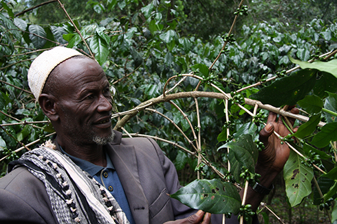 An Ethiopian farmer with his crop